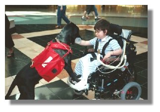 Photo:  young girl in wheelchair being handed an object by a service dog - End of Photo Description